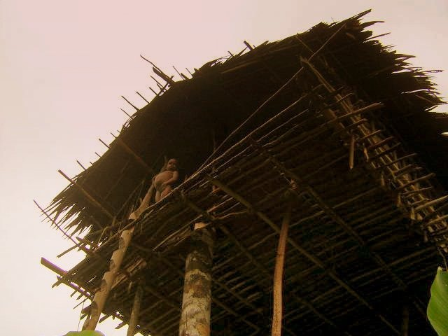 maison typique papouasie