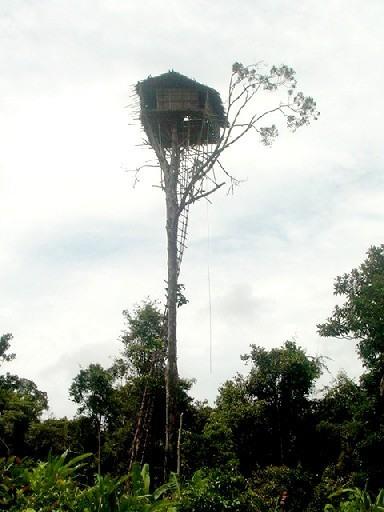 maisons arbre Korowai