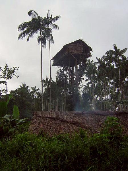 maison arbre papouasie