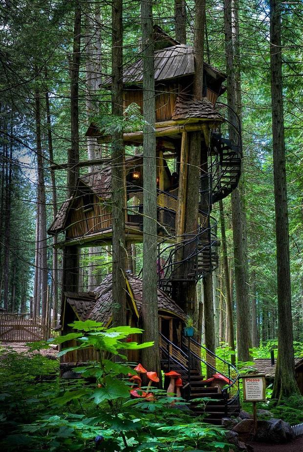 maisons dans les arbres incroyables