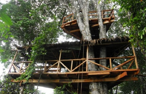 maison dans un arbre au gabon. Black Bedroom Furniture Sets. Home Design Ideas