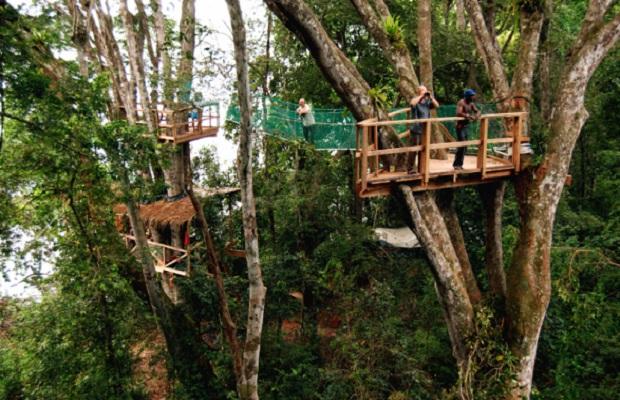Maison dans un arbre au gabon - Construire une maison dans un arbre ...