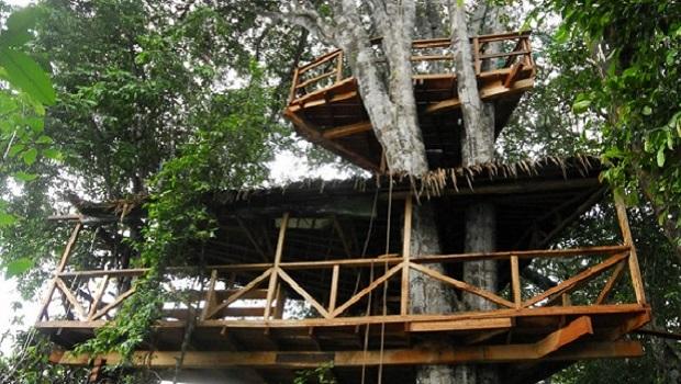 cabane dans un arbre gabon