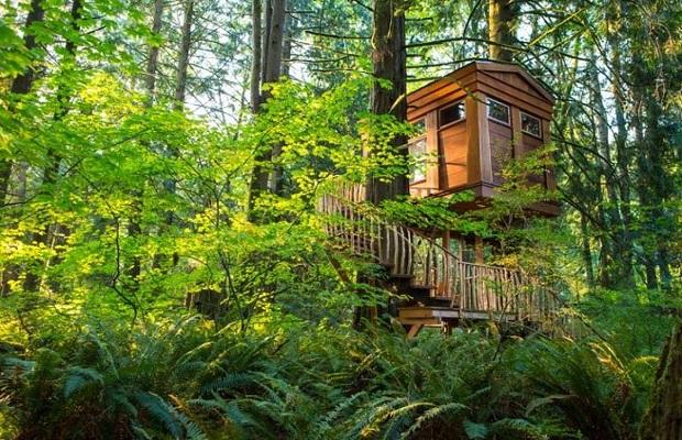 hôtels dans les arbres