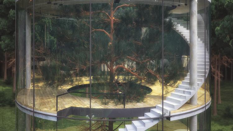 maison arbre centre (4)