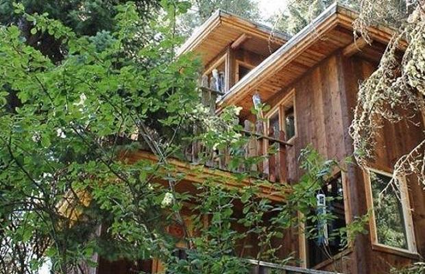 cabane arbre superbe