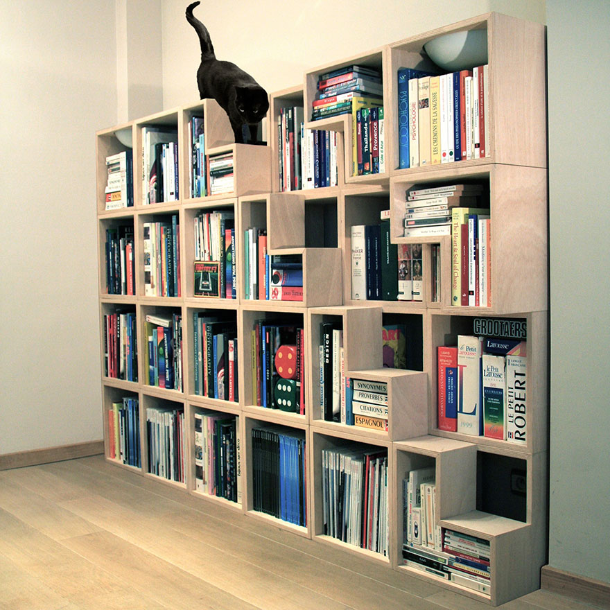 étagère livres chat