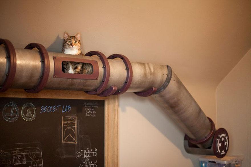 tuyaux chat