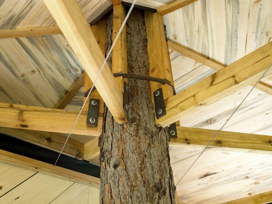 cabane arbre ethan (5)
