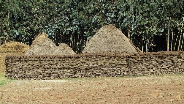 ferme éthiopie 1