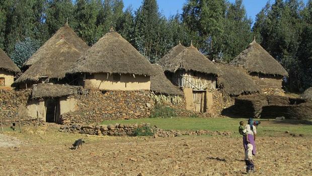 ferme éthiopie 2