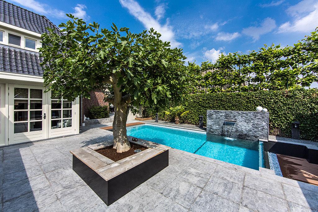 jardin avec piscine en verre (10)