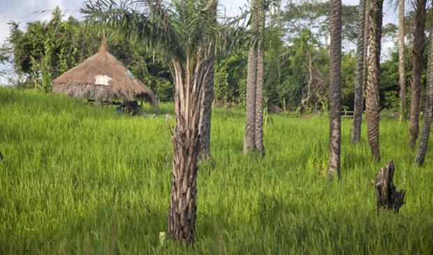 maison typique guinée bissau 3
