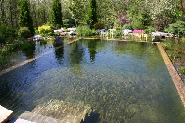 piscine naturelle (1)