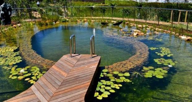 piscine naturelle (11)