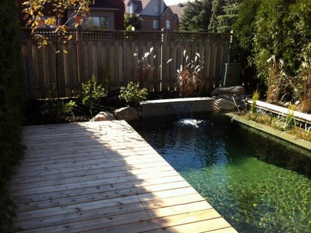 piscine naturelle (2)
