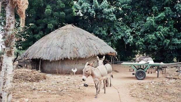 Les maisons en Gambie