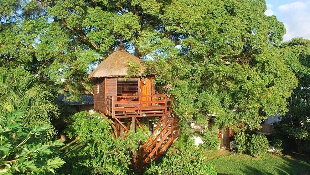 cabane arbre maurice