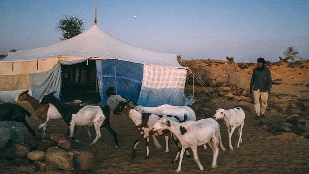 tente mauritanie