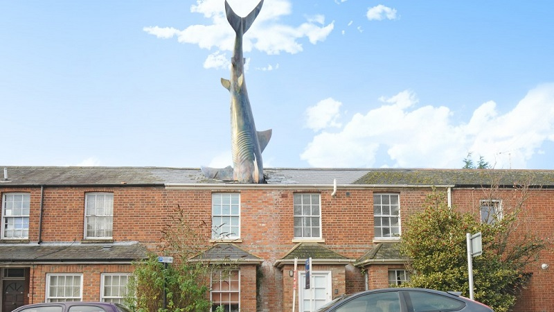 maison requin oxford