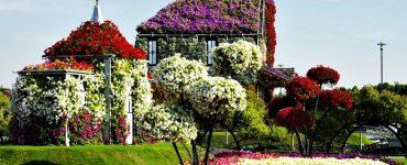 maison de fleurs à dubai