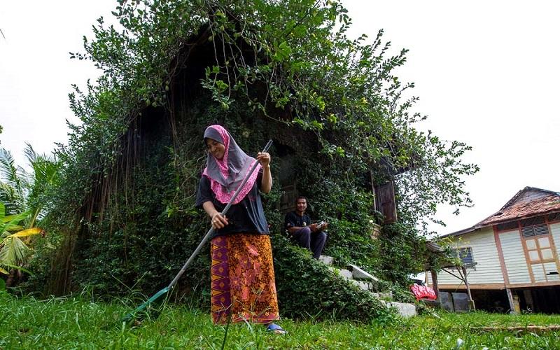 maison plante malaisie