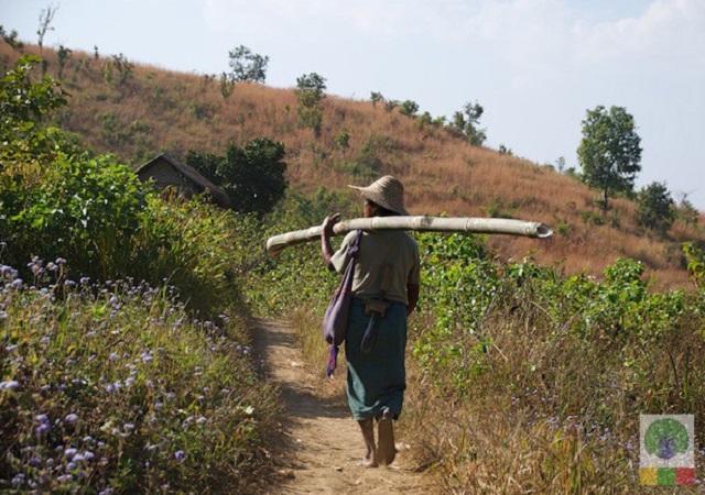 maison bambou birmanie