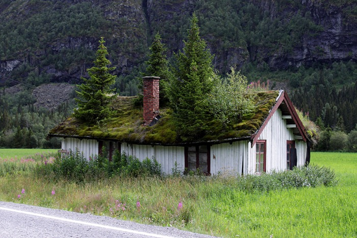 toit herbe norvège