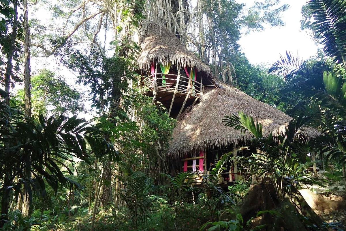 cabane dans un banian vanuatu