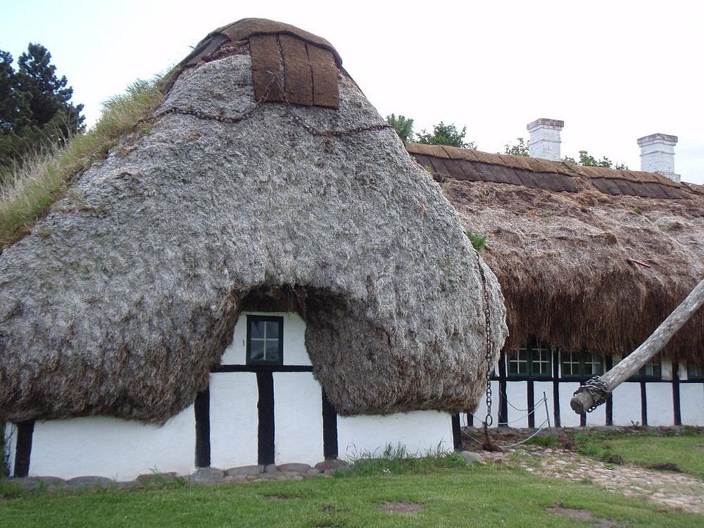 Læsø toit algue