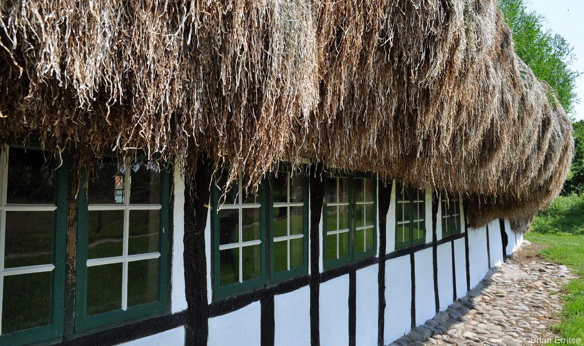 Læsø toit algues