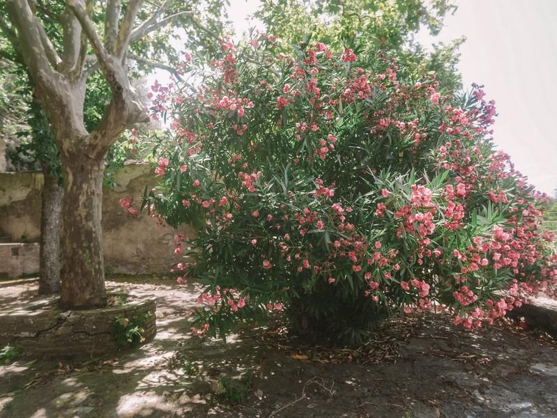 jardin chateau merlacce centuri