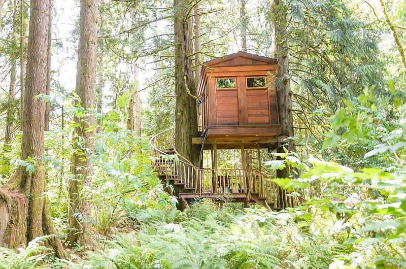 cabane arbre usa