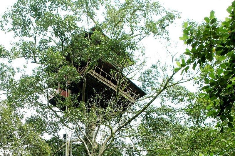 cabanes dans les arbres de luxe